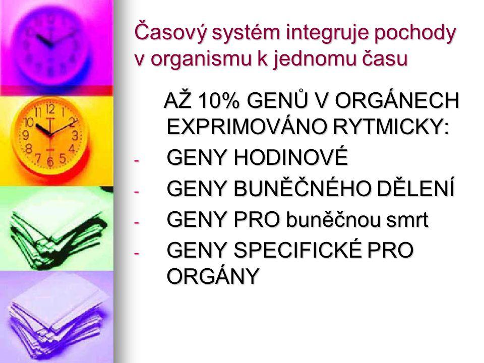 Časový systém integruje pochody v organismu k jednomu času