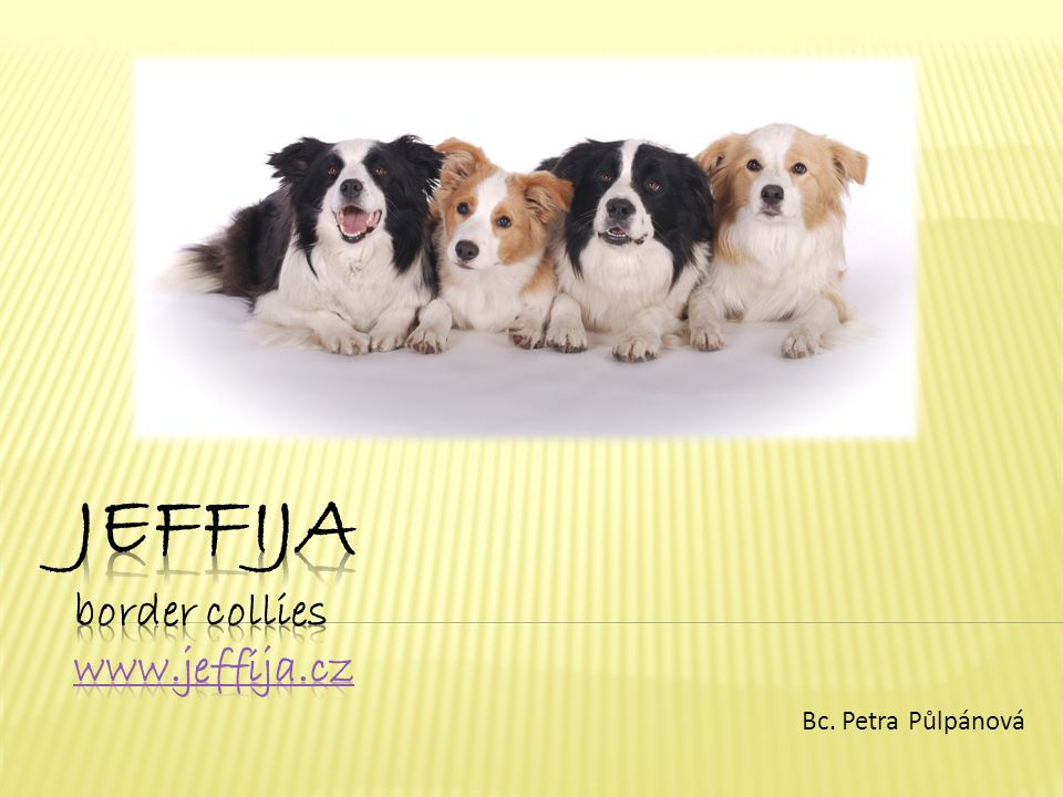 Jeffija border collies www.jeffija.cz