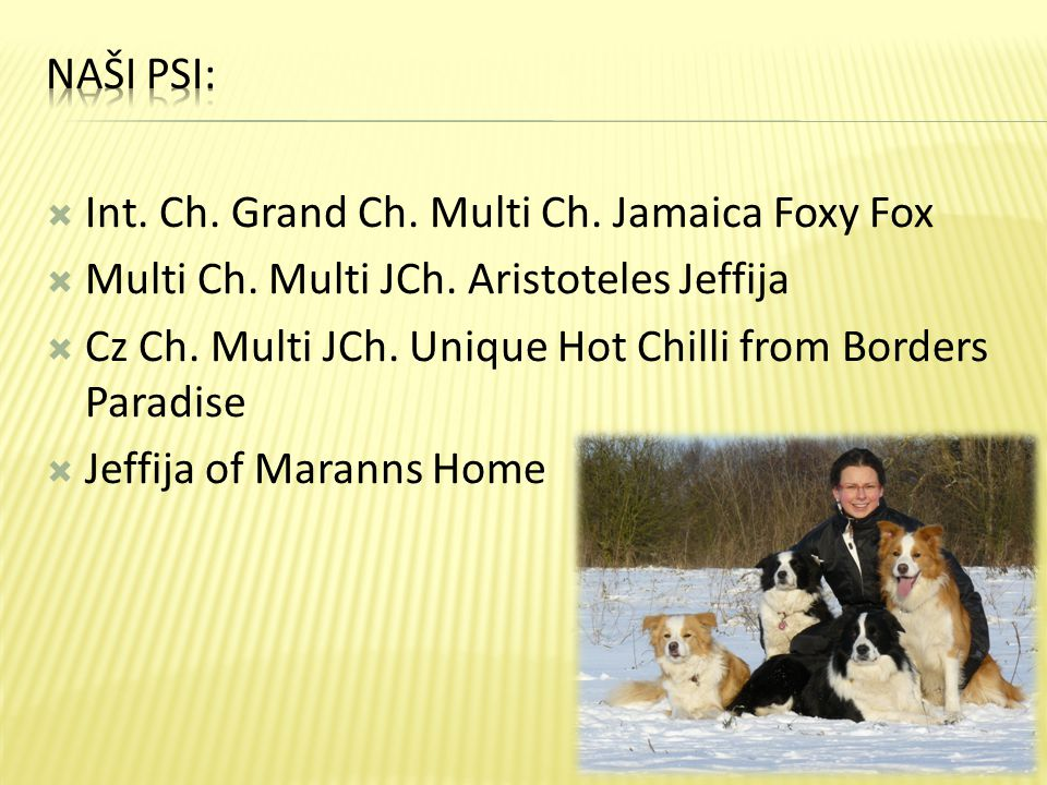 Naši psi: Int. Ch. Grand Ch. Multi Ch. Jamaica Foxy Fox. Multi Ch. Multi JCh. Aristoteles Jeffija.