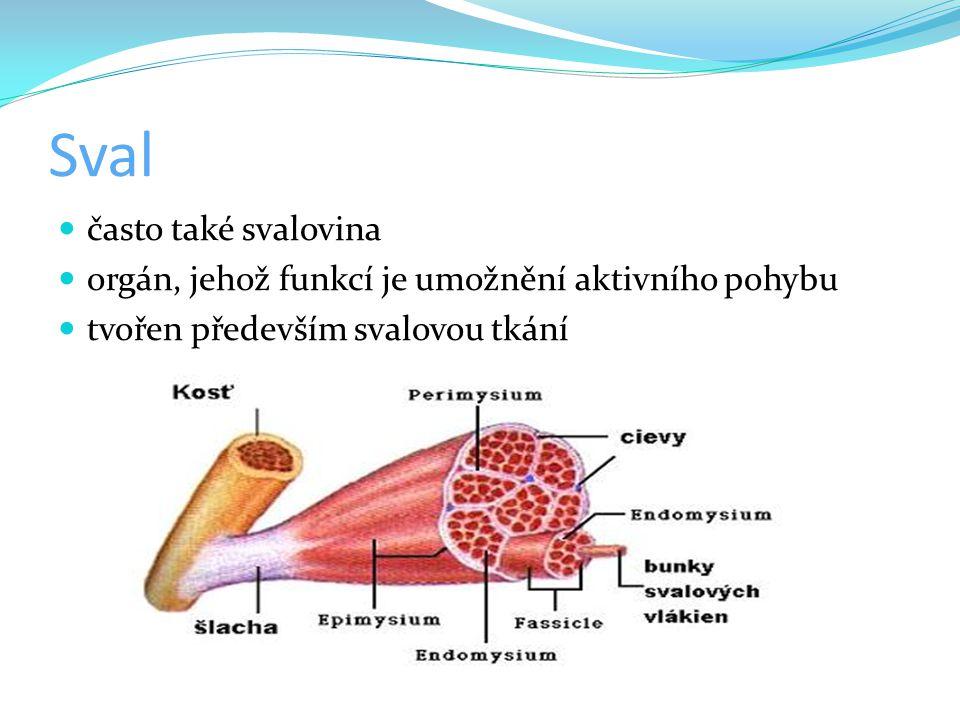 Sval často také svalovina