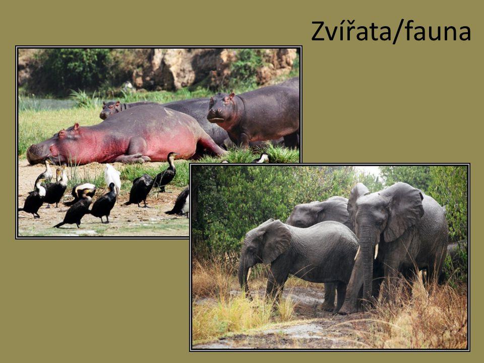 Zvířata/fauna