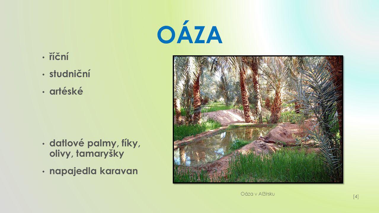 OÁza říční studniční artéské datlové palmy, fíky, olivy, tamaryšky