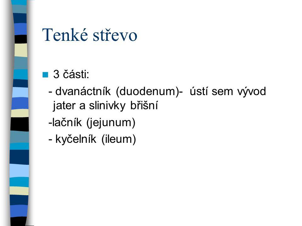 Tenké střevo 3 části: - dvanáctník (duodenum)- ústí sem vývod jater a slinivky břišní. -lačník (jejunum)