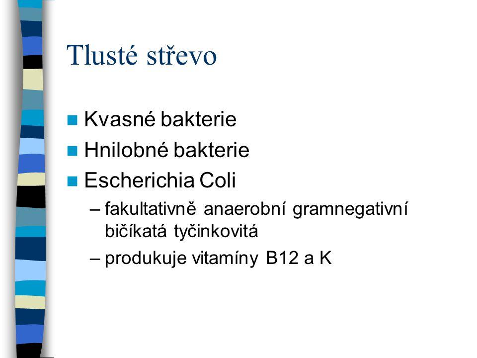 Tlusté střevo Kvasné bakterie Hnilobné bakterie Escherichia Coli