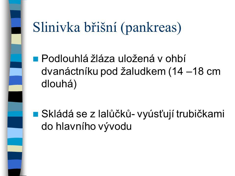 Slinivka břišní (pankreas)
