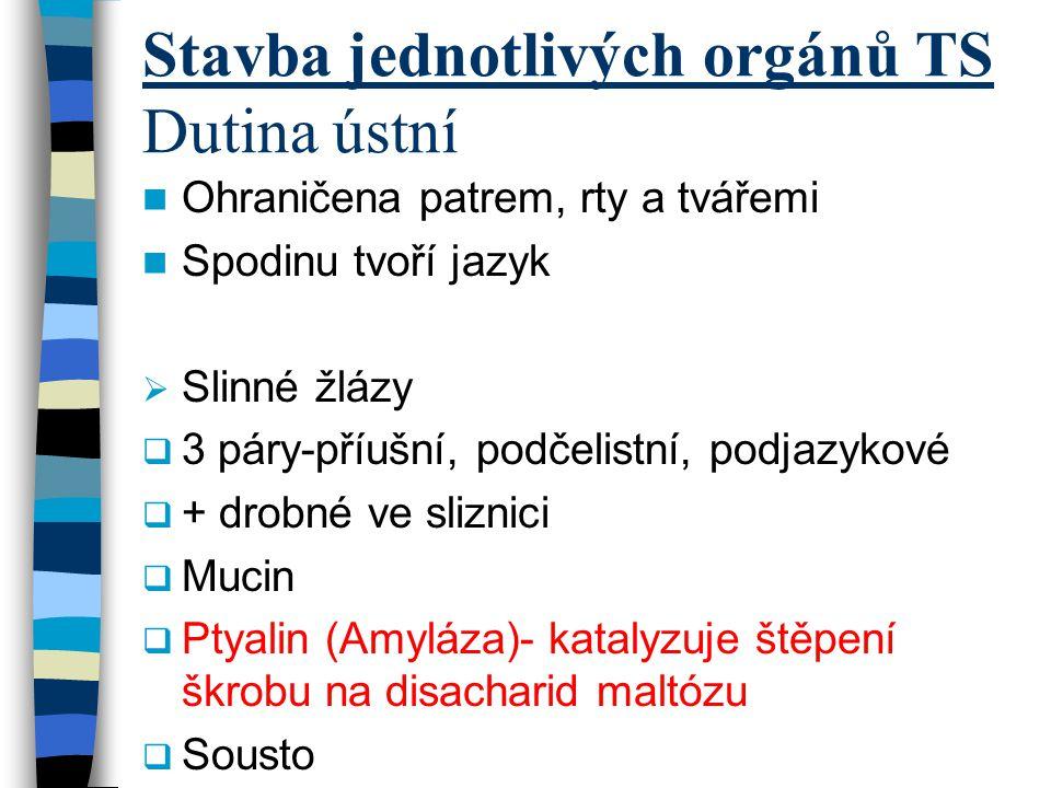 Stavba jednotlivých orgánů TS Dutina ústní