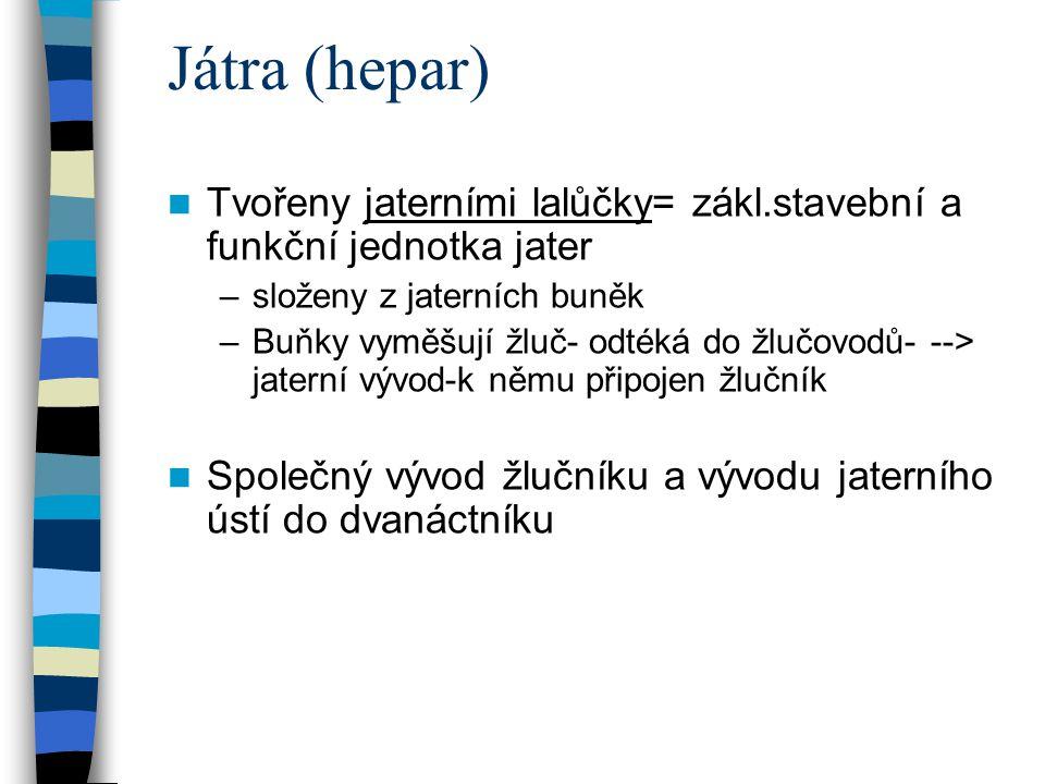 Játra (hepar) Tvořeny jaterními lalůčky= zákl.stavební a funkční jednotka jater. složeny z jaterních buněk.