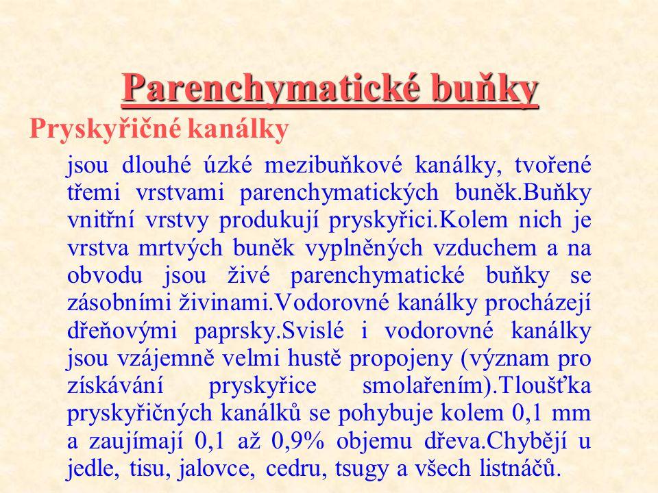 Parenchymatické buňky