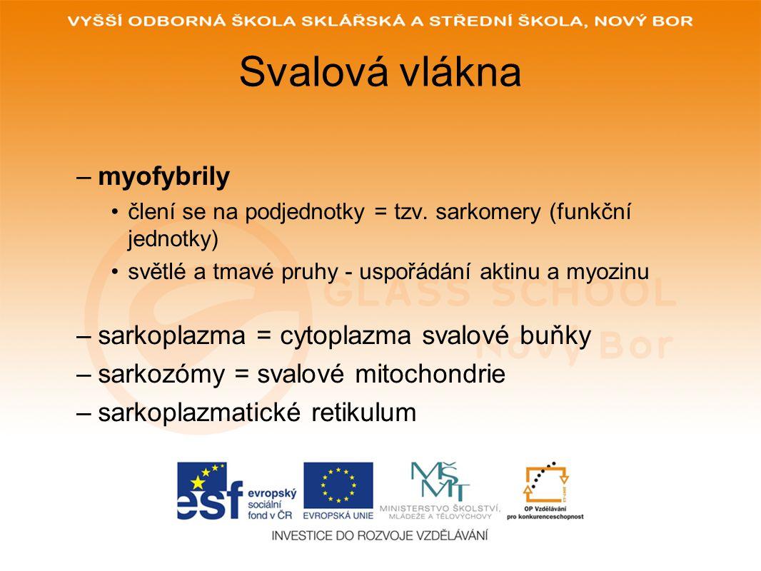 Svalová vlákna myofybrily sarkoplazma = cytoplazma svalové buňky