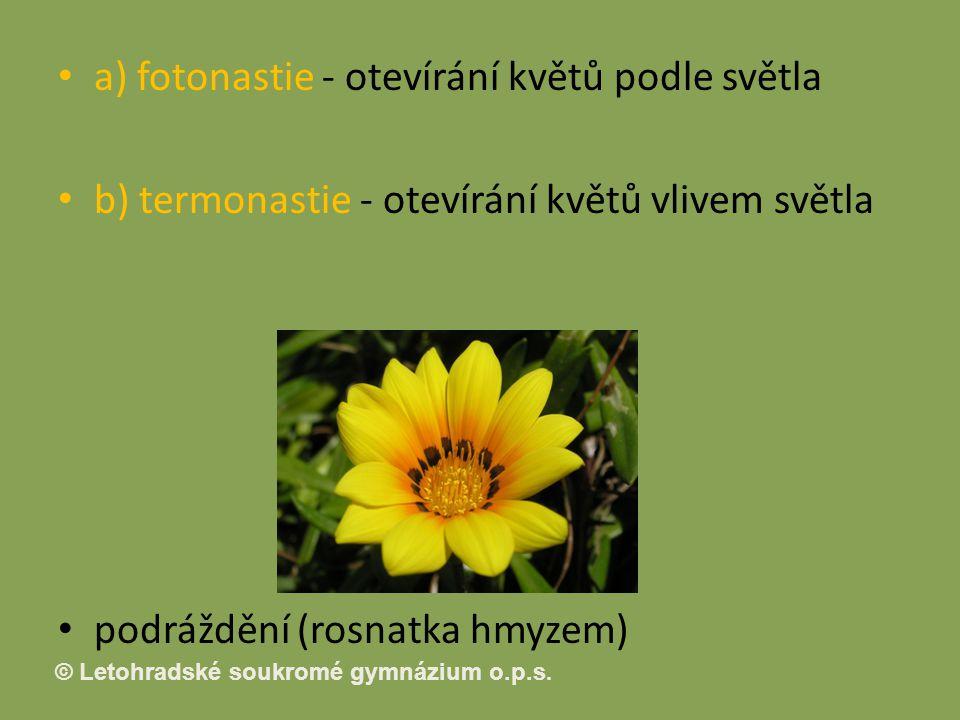 a) fotonastie - otevírání květů podle světla