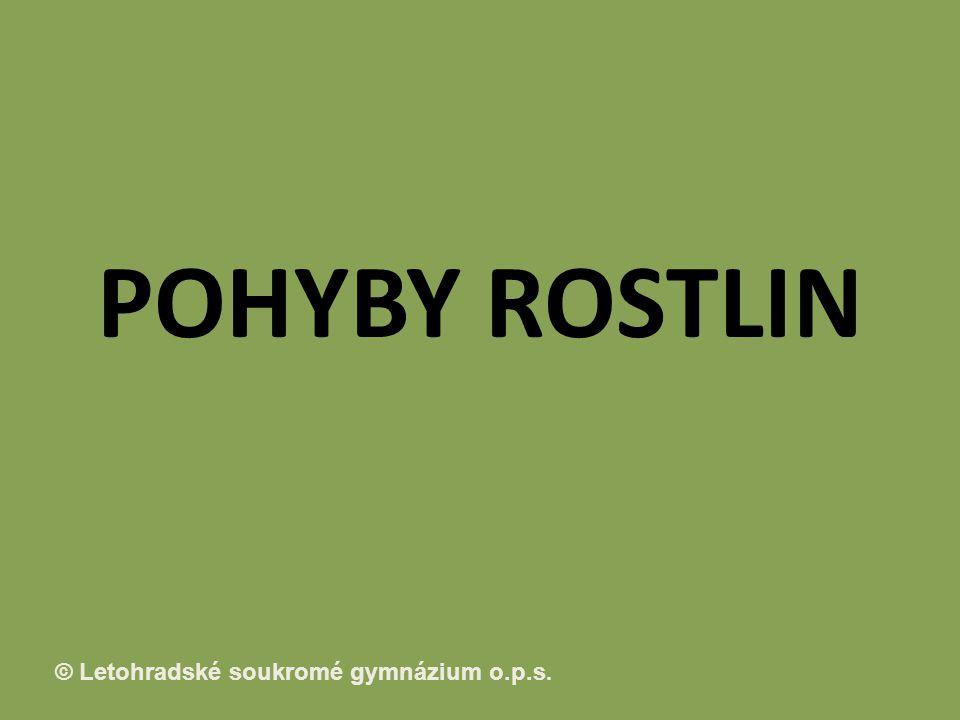 POHYBY ROSTLIN