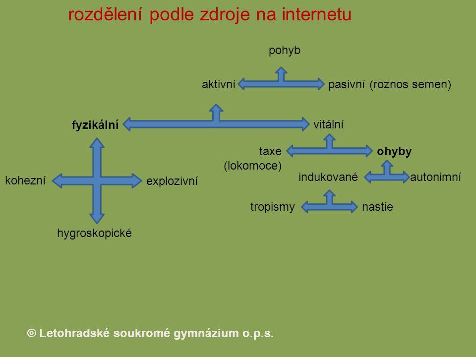 rozdělení podle zdroje na internetu