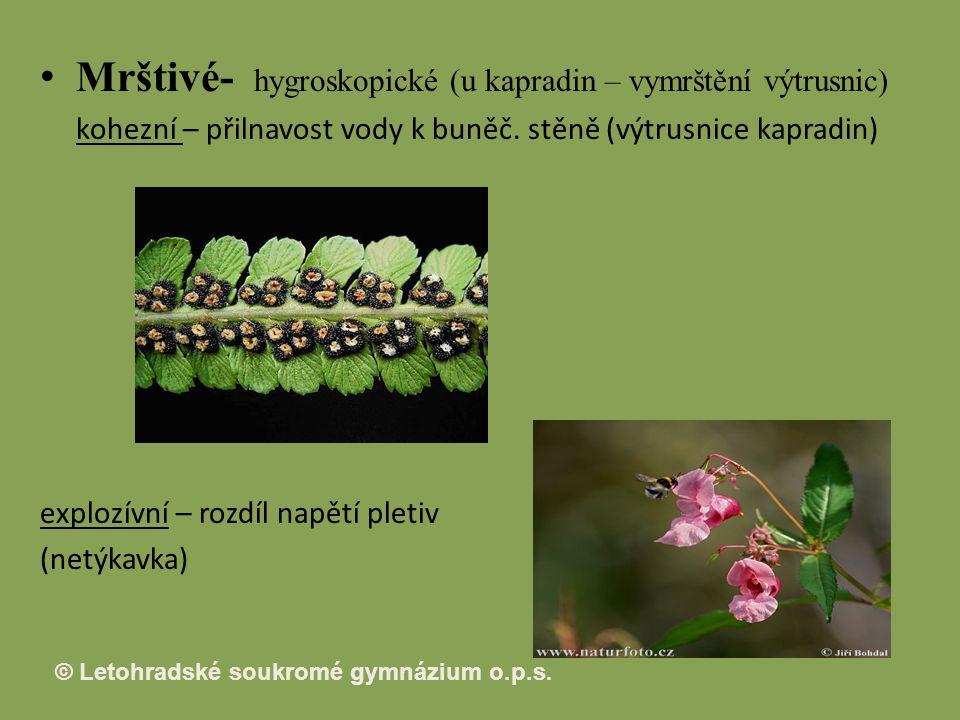 Mrštivé- hygroskopické (u kapradin – vymrštění výtrusnic)