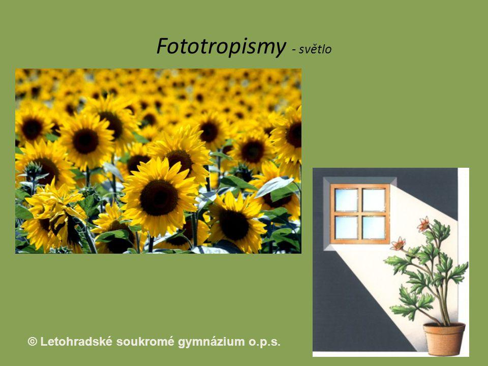 Fototropismy - světlo