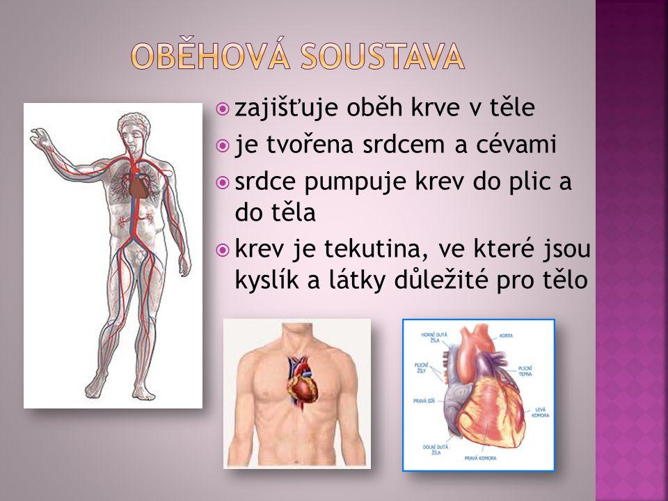 oběhová soustava zajišťuje oběh krve v těle je tvořena srdcem a cévami