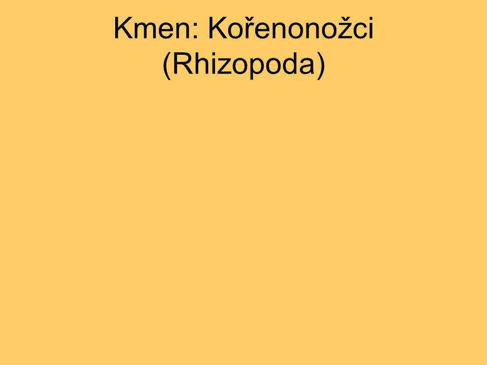 Kmen: Kořenonožci (Rhizopoda)
