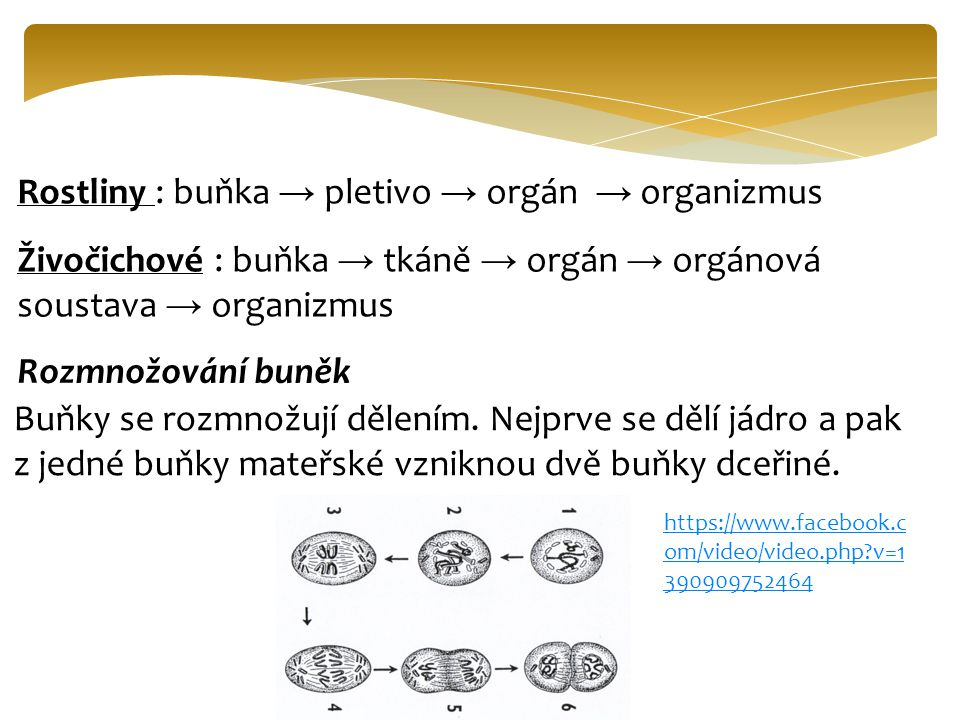 Rostliny : buňka → pletivo → orgán → organizmus
