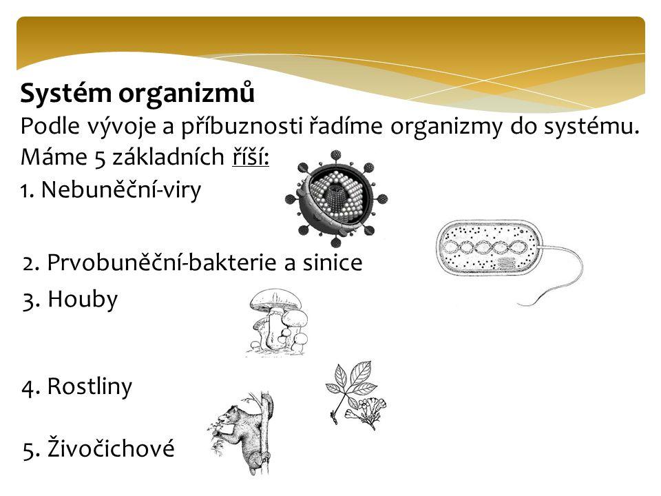 Systém organizmů Podle vývoje a příbuznosti řadíme organizmy do systému. Máme 5 základních říší: 1. Nebuněční-viry.