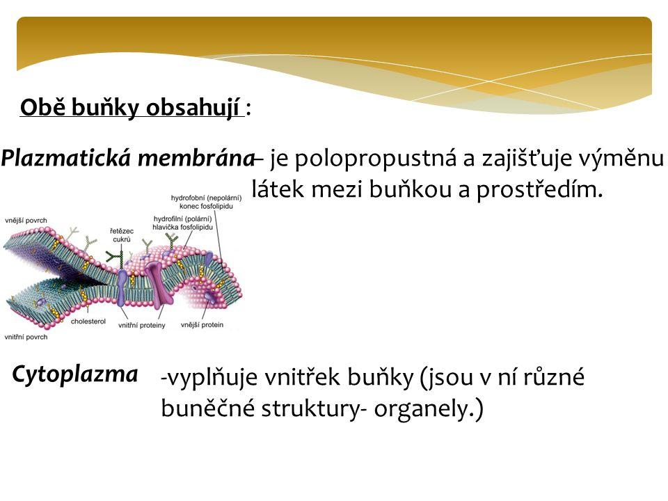 Obě buňky obsahují : Plazmatická membrána. – je polopropustná a zajišťuje výměnu látek mezi buňkou a prostředím.