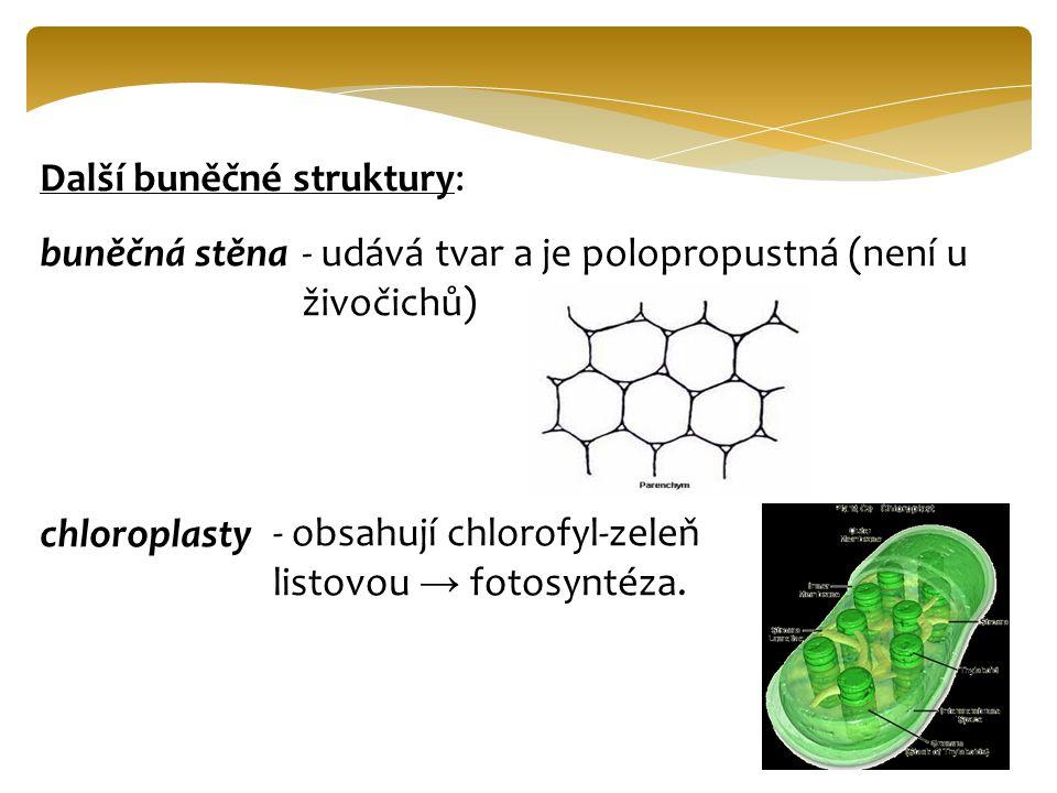 Další buněčné struktury: