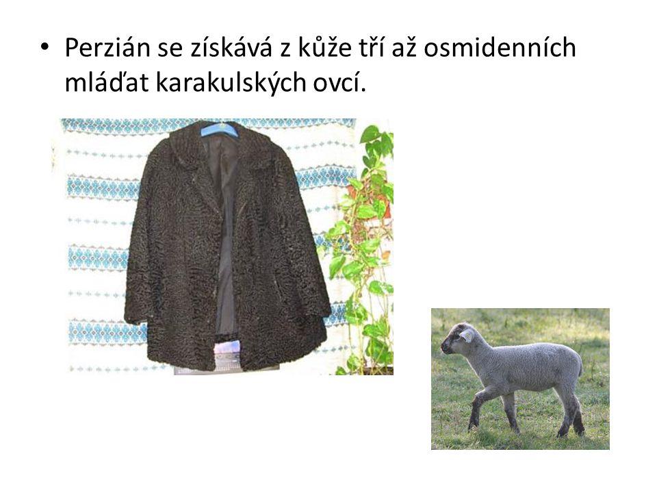 Perzián se získává z kůže tří až osmidenních mláďat karakulských ovcí.