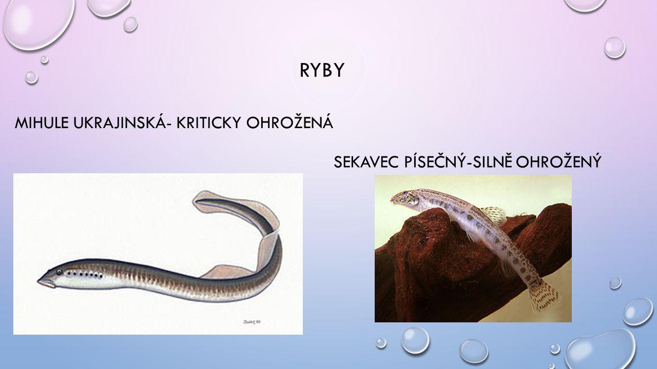 RYBY MIHULE UKRAJINSKÁ- KRITICKY OHROŽENÁ