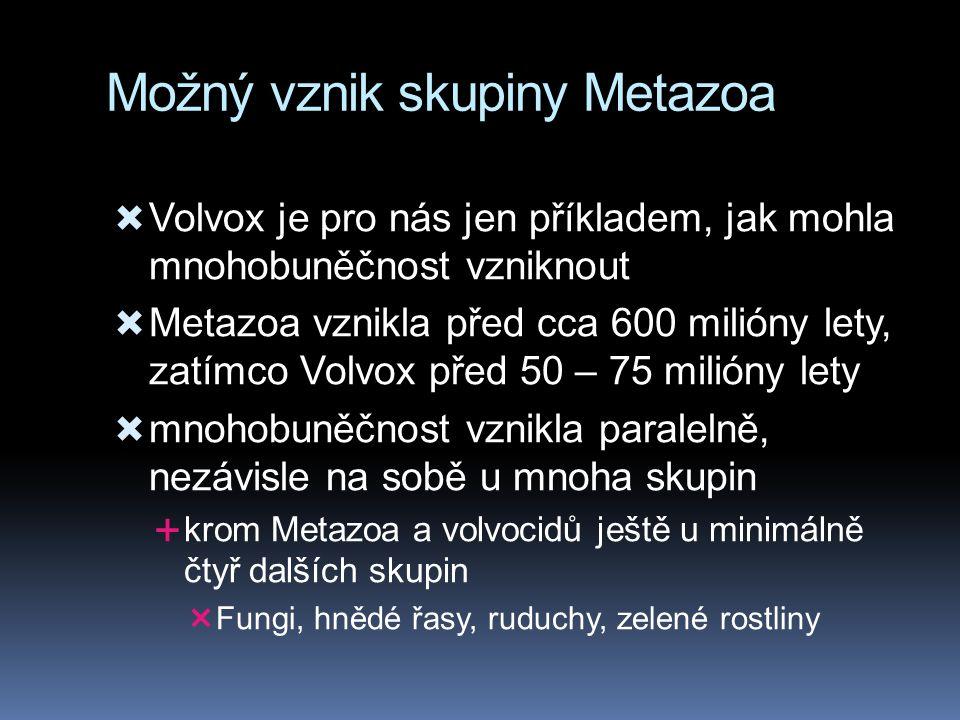 Možný vznik skupiny Metazoa