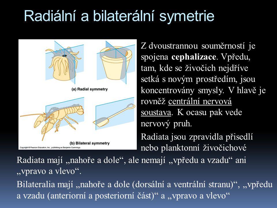 Radiální a bilaterální symetrie