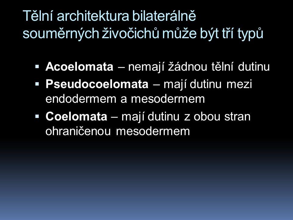 Tělní architektura bilaterálně souměrných živočichů může být tří typů