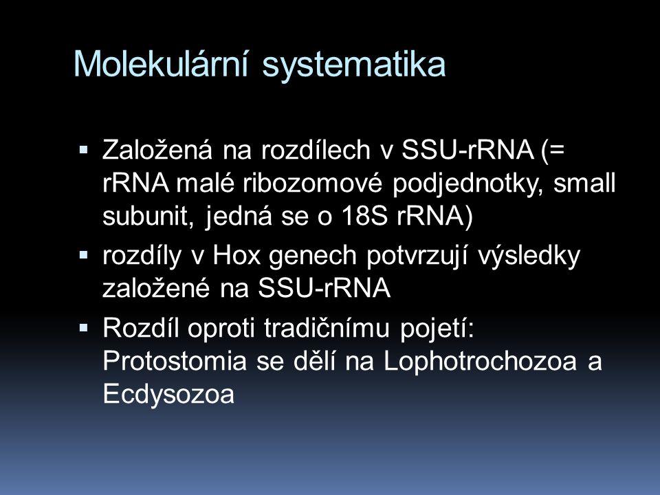 Molekulární systematika