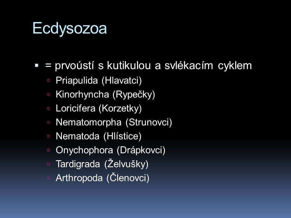 Ecdysozoa = prvoústí s kutikulou a svlékacím cyklem