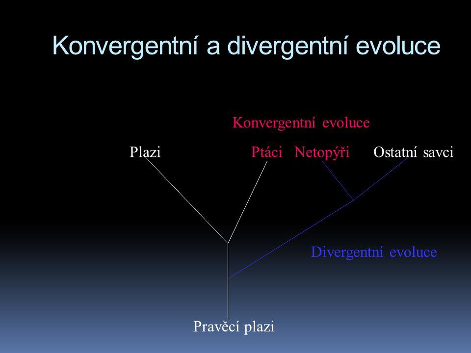 Konvergentní a divergentní evoluce