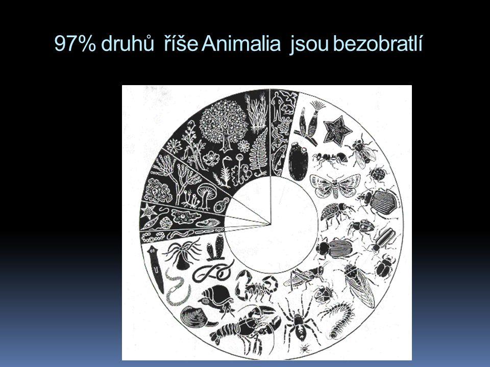 97% druhů říše Animalia jsou bezobratlí
