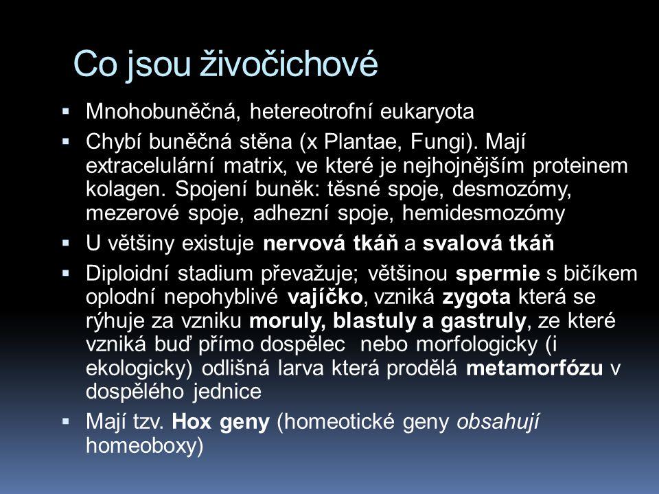 Co jsou živočichové Mnohobuněčná, hetereotrofní eukaryota