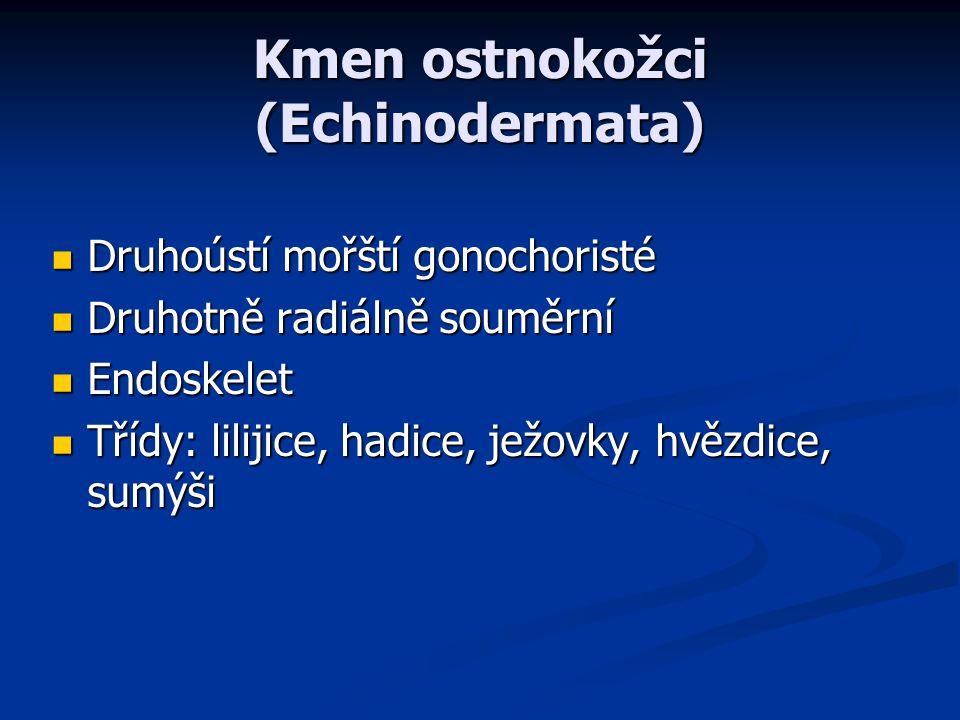 Kmen ostnokožci (Echinodermata)
