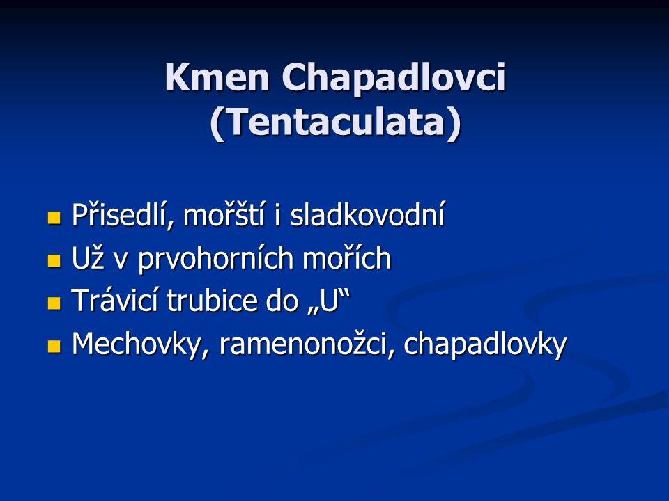 Kmen Chapadlovci (Tentaculata)