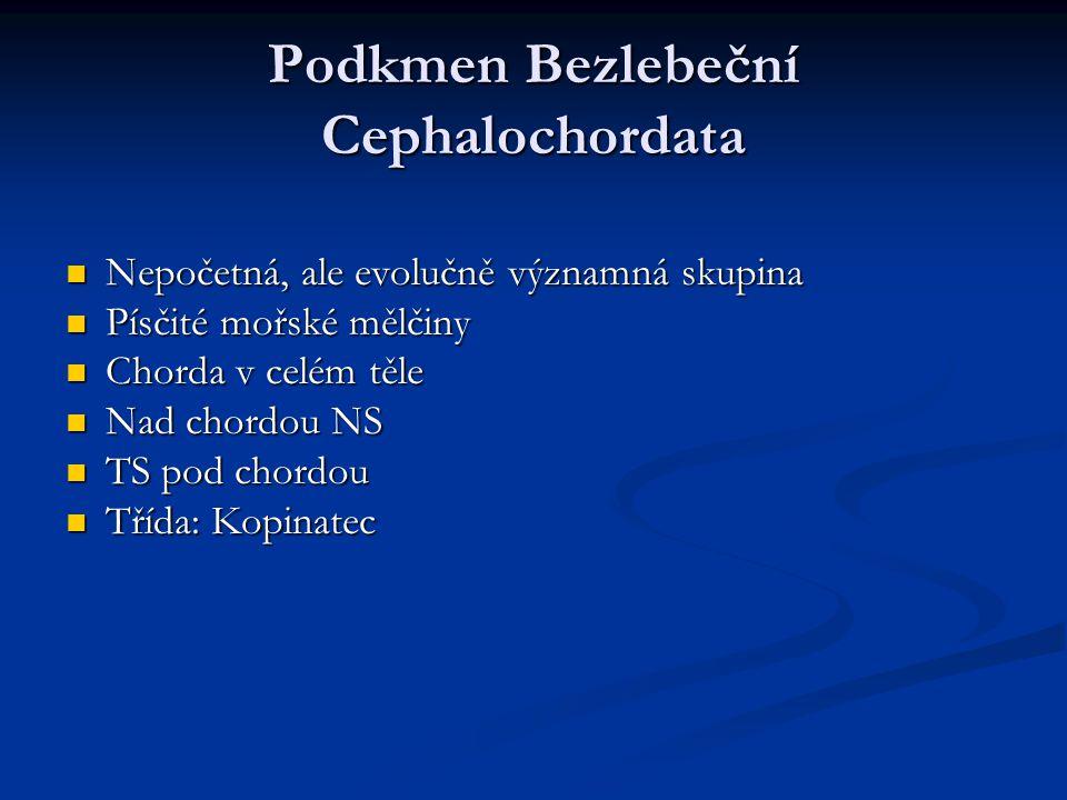 Podkmen Bezlebeční Cephalochordata