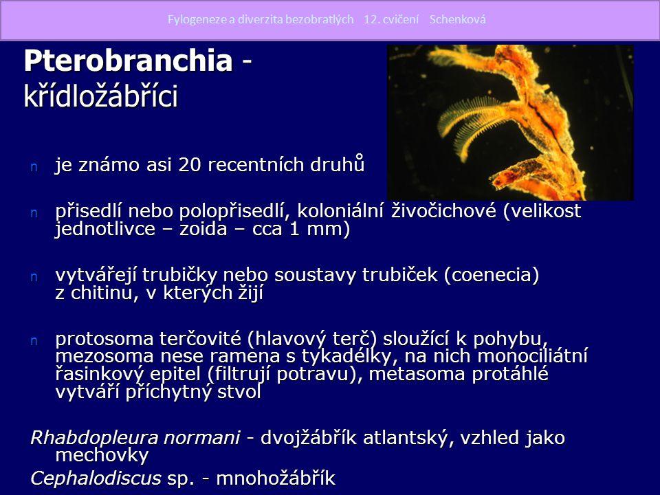 Pterobranchia - křídložábříci