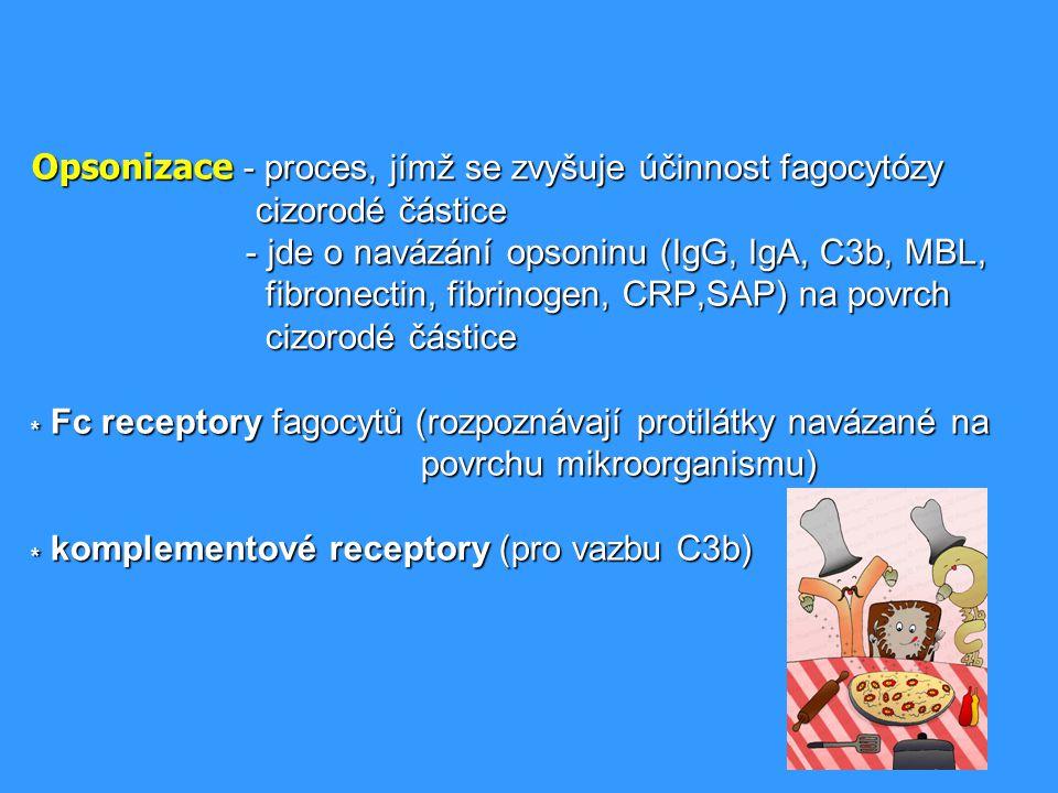Opsonizace - proces, jímž se zvyšuje účinnost fagocytózy cizorodé částice - jde o navázání opsoninu (IgG, IgA, C3b, MBL, fibronectin, fibrinogen, CRP,SAP) na povrch cizorodé částice * Fc receptory fagocytů (rozpoznávají protilátky navázané na povrchu mikroorganismu) * komplementové receptory (pro vazbu C3b)