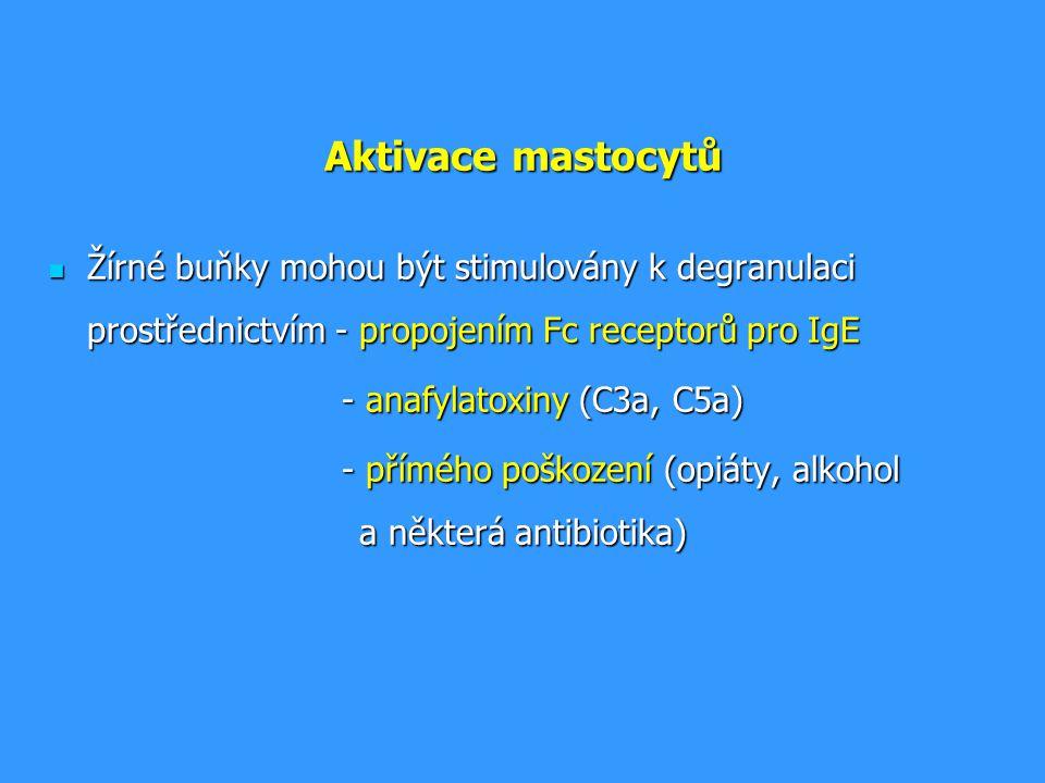 Aktivace mastocytů Žírné buňky mohou být stimulovány k degranulaci prostřednictvím - propojením Fc receptorů pro IgE.