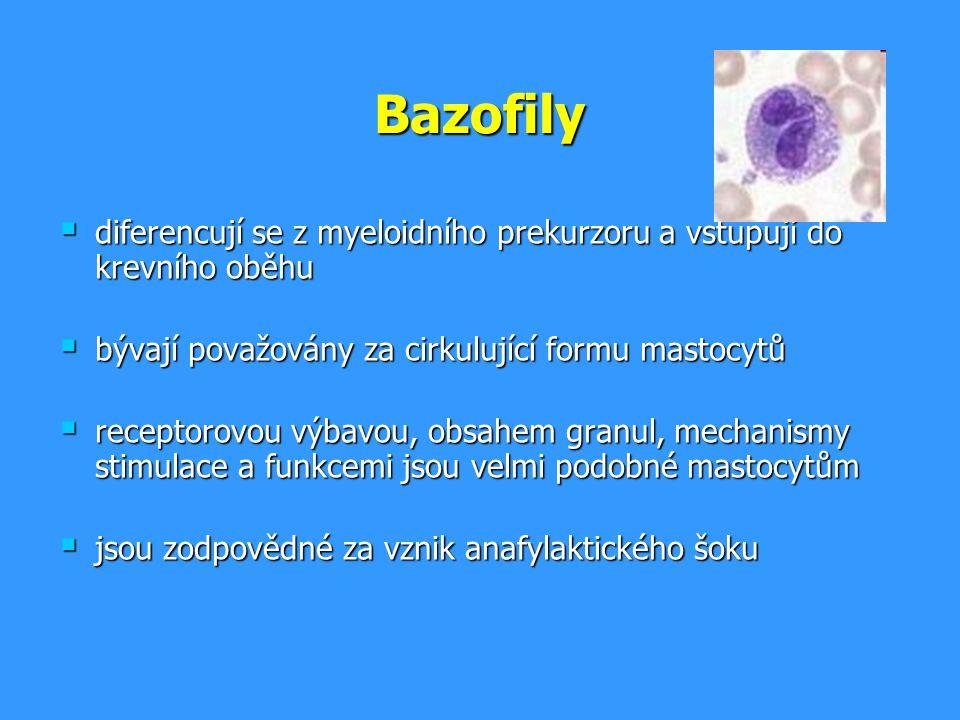 Bazofily diferencují se z myeloidního prekurzoru a vstupují do krevního oběhu. bývají považovány za cirkulující formu mastocytů.