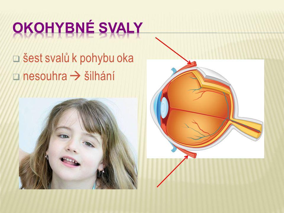 OKOHYBNÉ SVALY šest svalů k pohybu oka nesouhra  šilhání