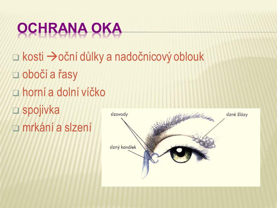 OCHRANA OKA kosti oční důlky a nadočnicový oblouk obočí a řasy