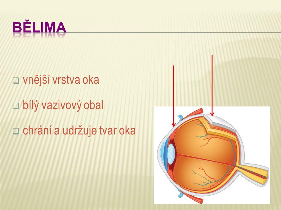 BĚLIMA vnější vrstva oka bílý vazivový obal chrání a udržuje tvar oka