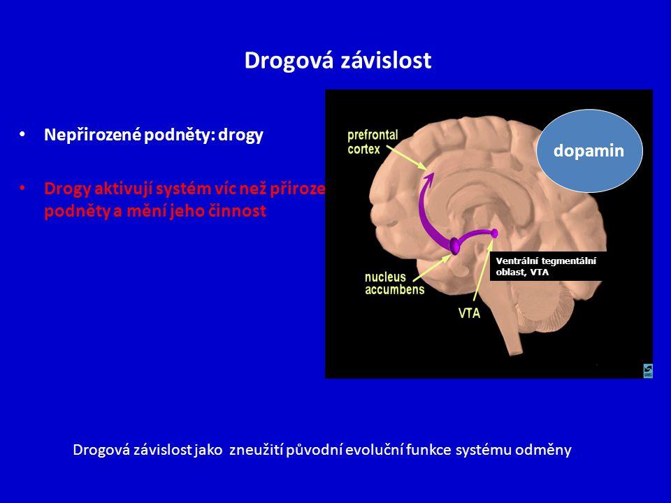 Drogová závislost Nepřirozené podněty: drogy dopamin