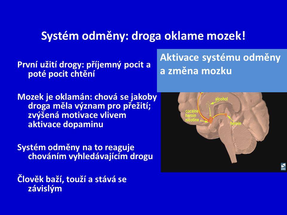 Systém odměny: droga oklame mozek!