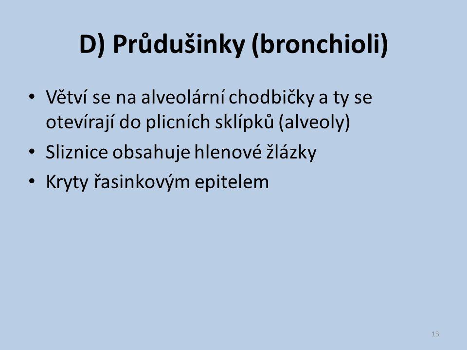 D) Průdušinky (bronchioli)