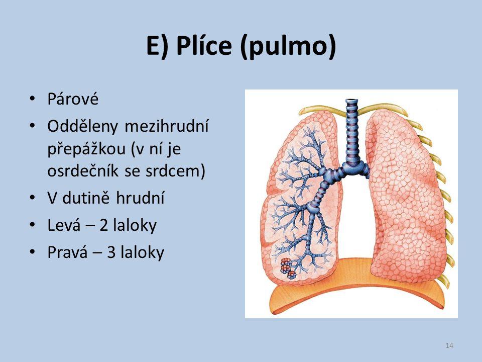 E) Plíce (pulmo) Párové