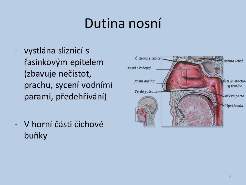 Dutina nosní vystlána sliznicí s řasinkovým epitelem (zbavuje nečistot, prachu, sycení vodními parami, předehřívání)