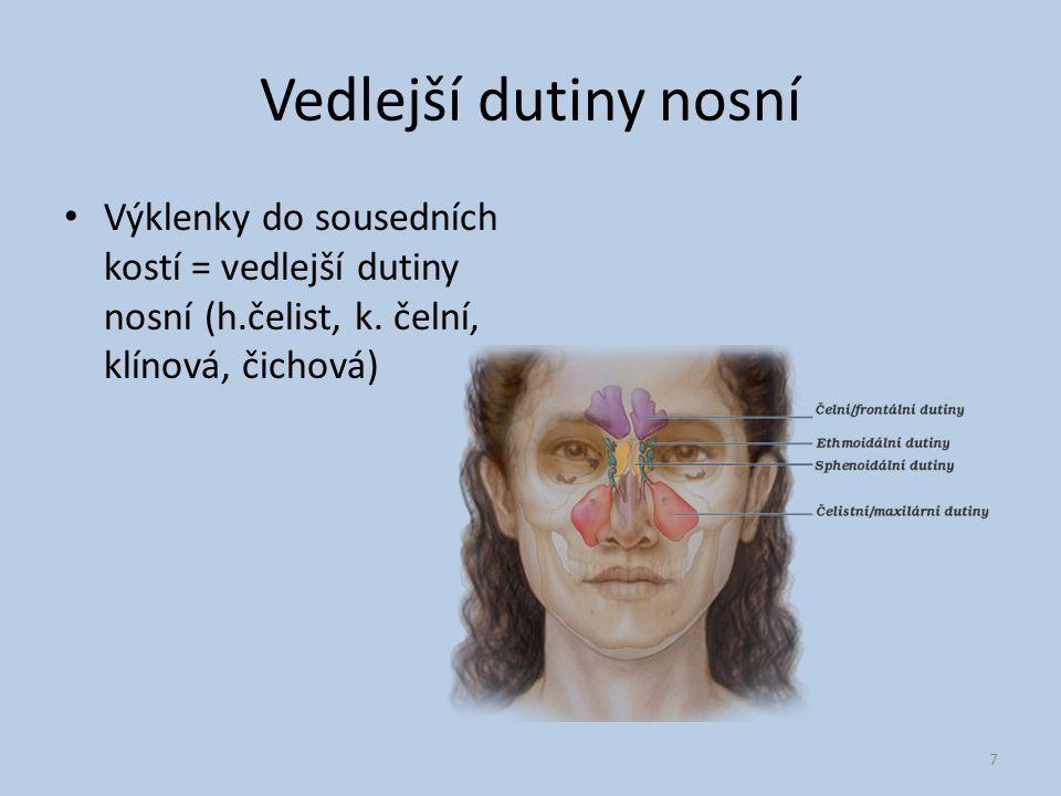 Vedlejší dutiny nosní Výklenky do sousedních kostí = vedlejší dutiny nosní (h.čelist, k.